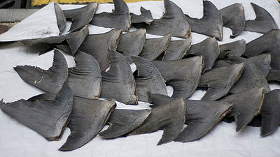 Shark Fins Drying