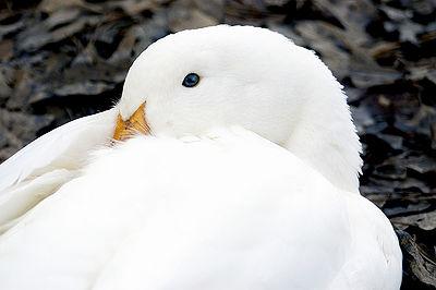 Sjy Bird