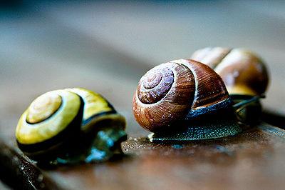 Snail Traffic Jam
