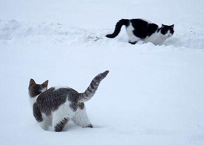 Stray Cat Snow