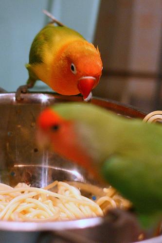 Bird Pasta