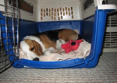 Comfy Crate