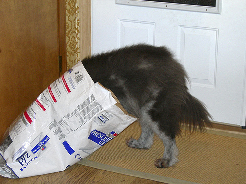 Dog in Dog Food bag