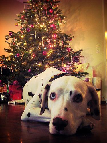 Dog Christmas.jpg