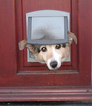 Doggie Door