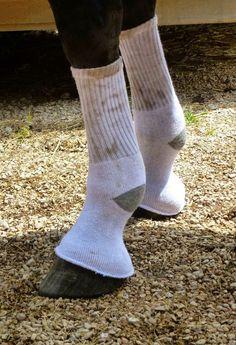 Horse bandage
