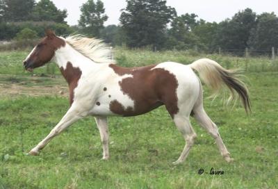 Paint Horse1.jpg