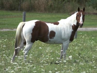 Paint Horse2.jpg