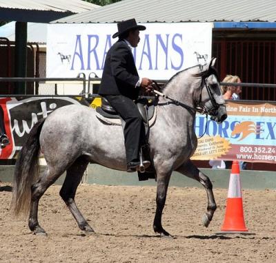 Paso Fino Horse