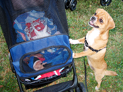 right Pet Stroller