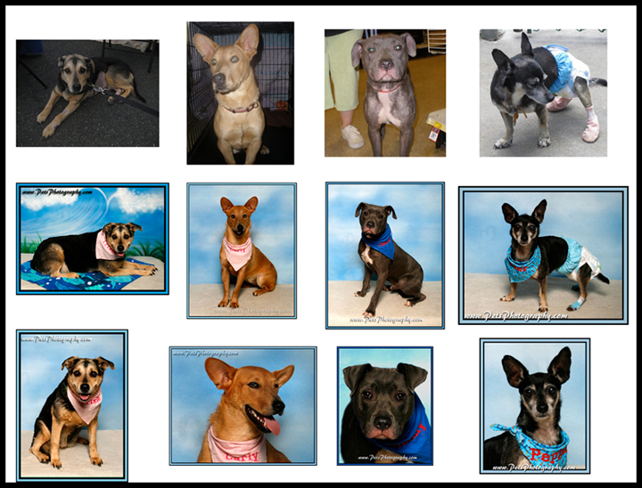 Pets Photography Shelter Dogs.jpg