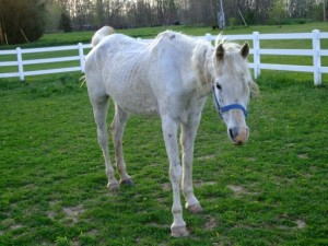 Sick Horse