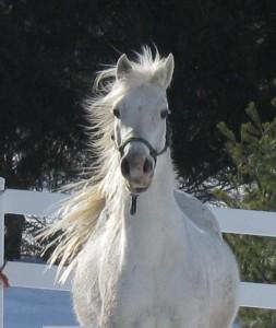 Rescue Horse Year 1.jpg